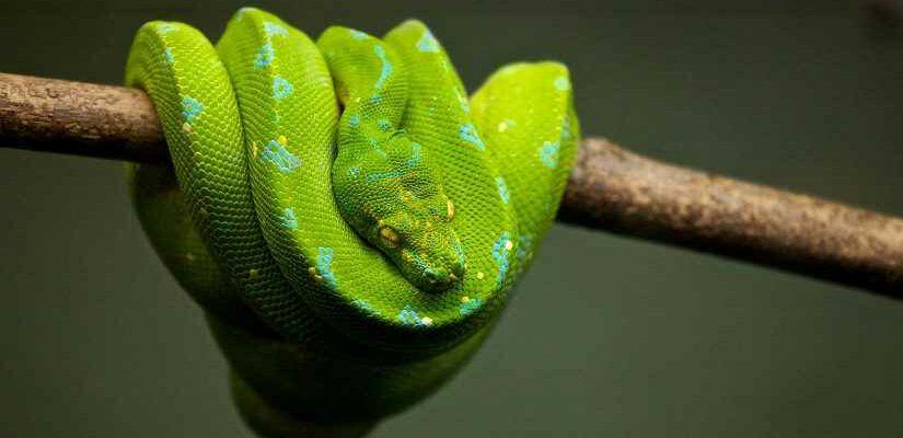 скрипт Linux скачать youtube python 3